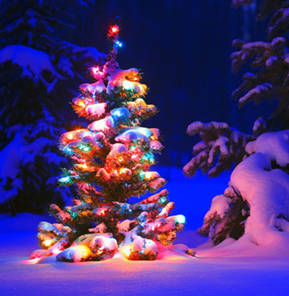 Snow and lights on tree in forest