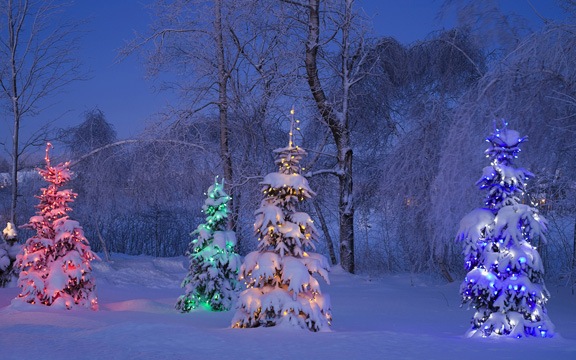 Snowy lit trees, winter, Canada